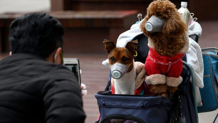 Cachorro de máscara