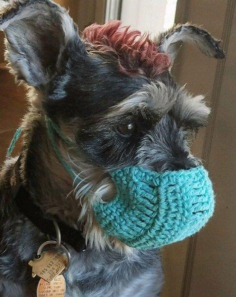 Cachorro com máscara de crochê