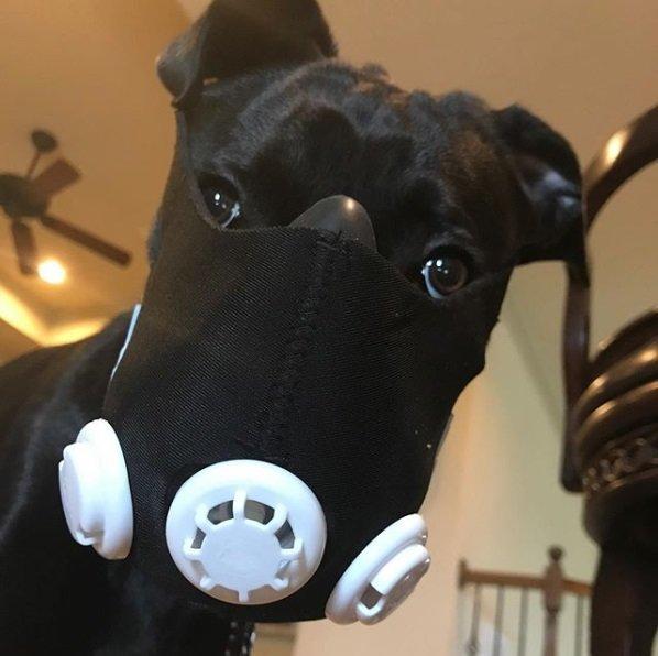 Pet com máscara com filtro