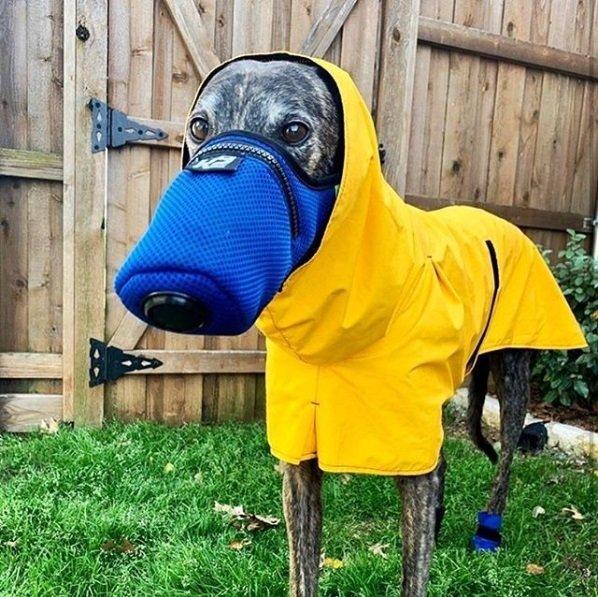 Cachorro com capa de chuva