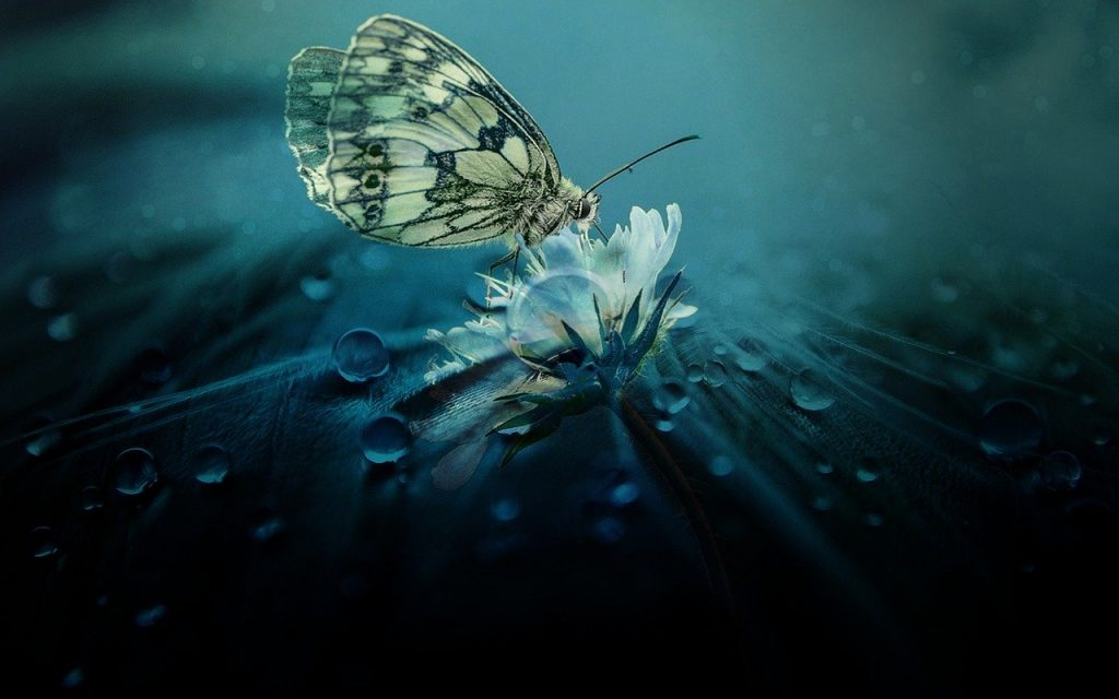 Lepdopterofobia medo de borboletas