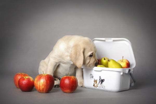 Cão come pêra