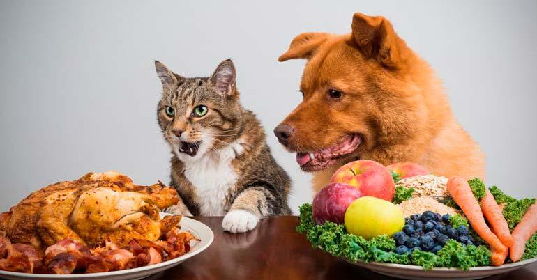 Cães e gatos comem frutas