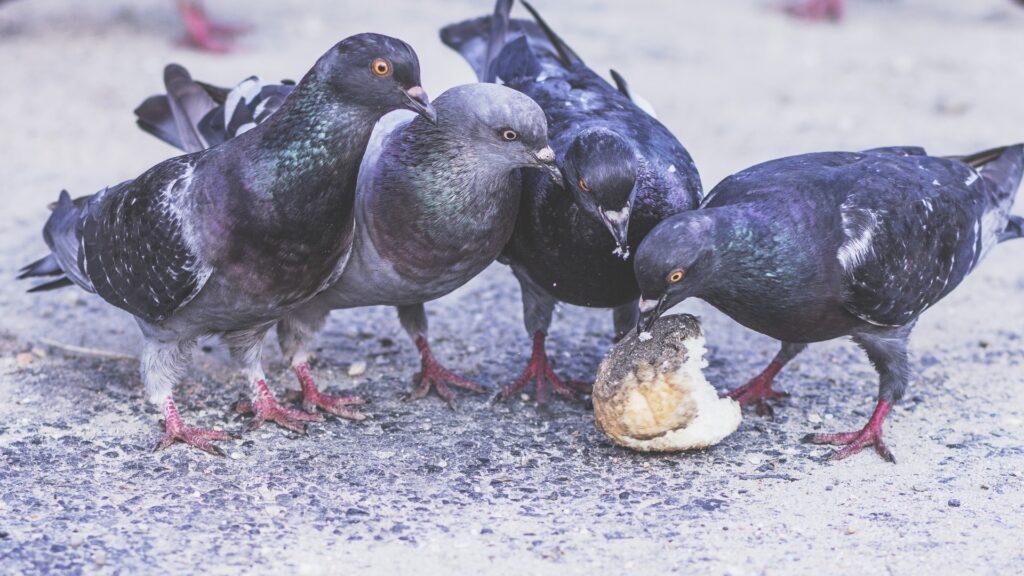 Espantador de pombos