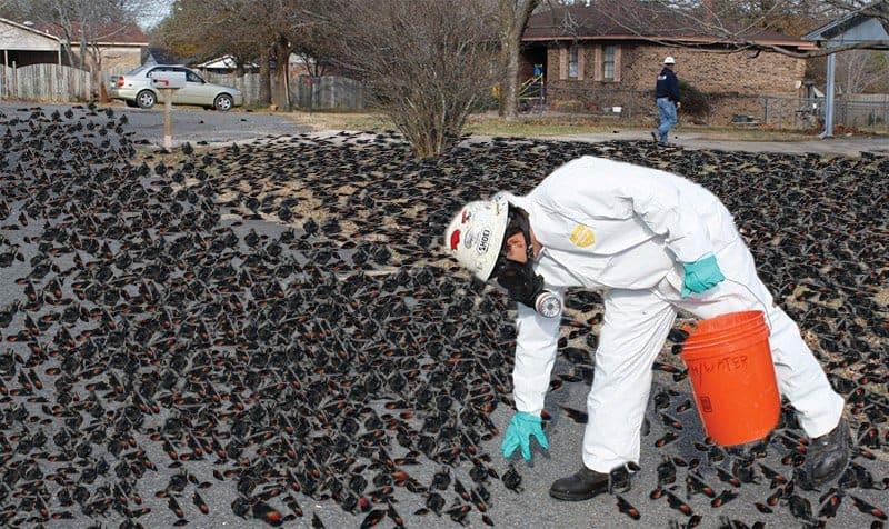 Pássaros mortos