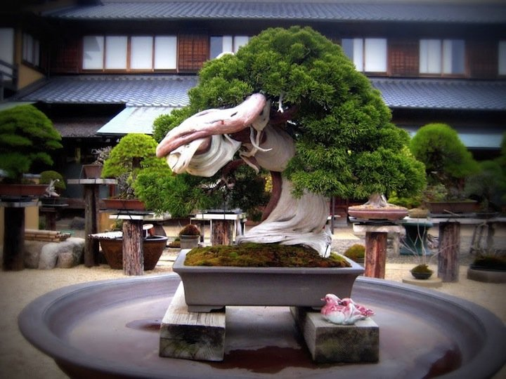 Bonsai Shunkaen