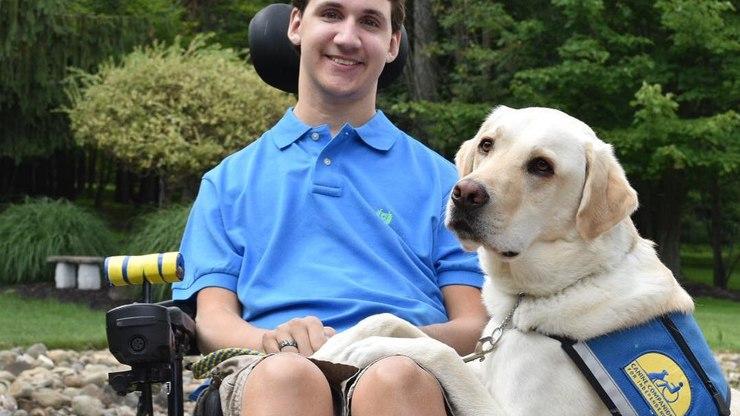 Cães de serviço de mobilidade