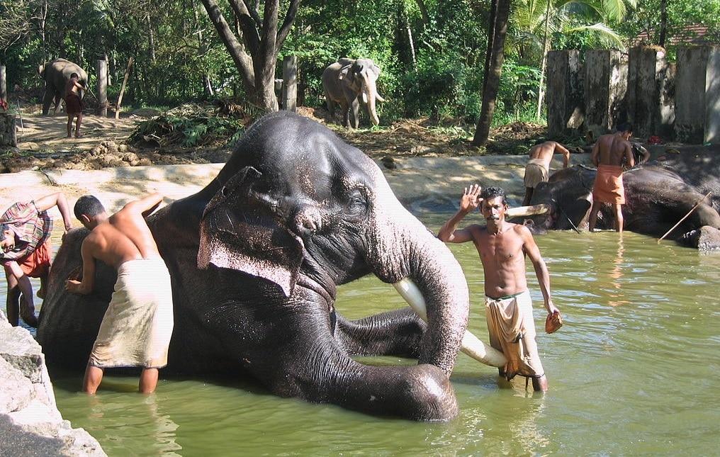 SPA do Elefante