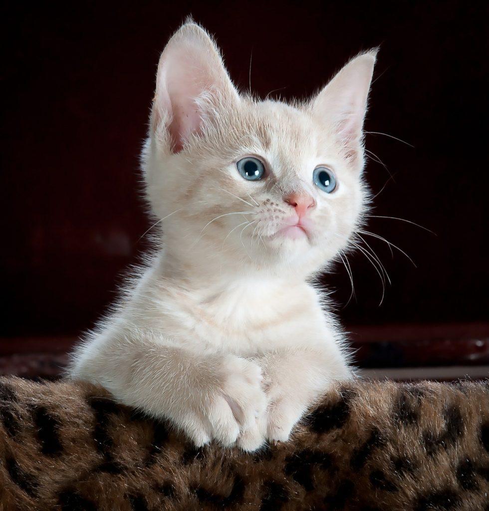 kitty 551554 1920