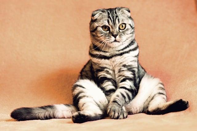 cat 2934720 640