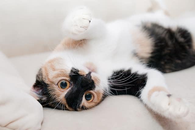 cat 649164 640