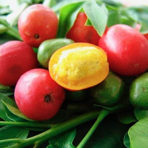 729e3595f0872bba31f2da904628e891 exotic fruit tropical fruits