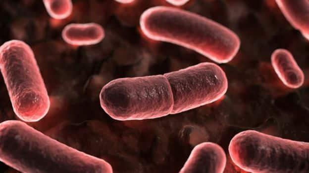bacteria yersinig pestis