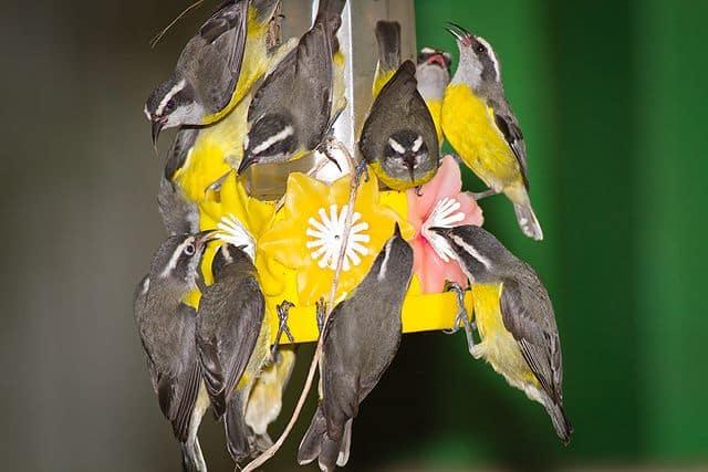 141a257a096f12dff7409cb197ce776f sons birds