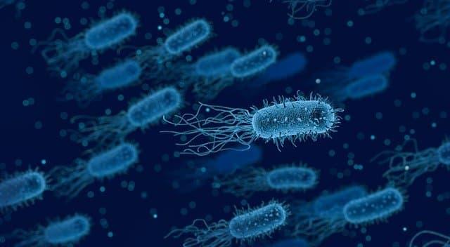 bacteria 3662695 640