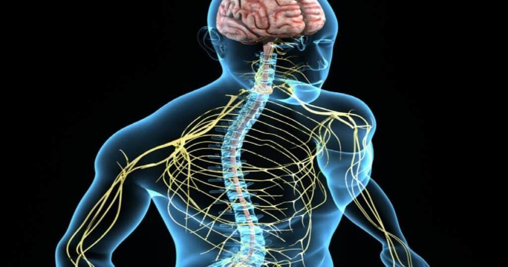 sistema nervoso periferico og