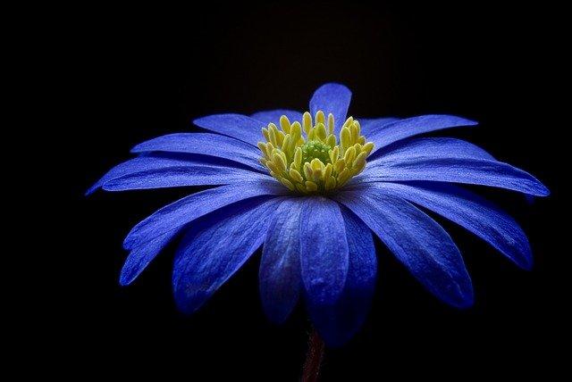 flower 56414 640