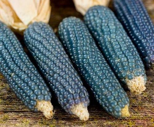 milho azul