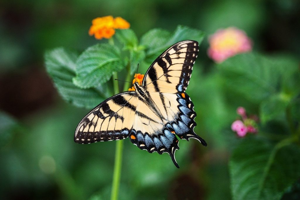 butterfly 1391809 1280