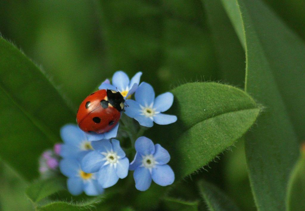 ladybug 308215 1280